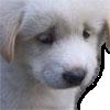 :sad_dog: